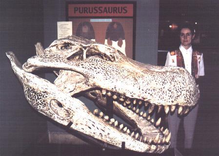 http://www.perou.net/ala/fr/ZPurusaurusCrocod.JPG